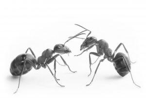 Ants - High Resolution